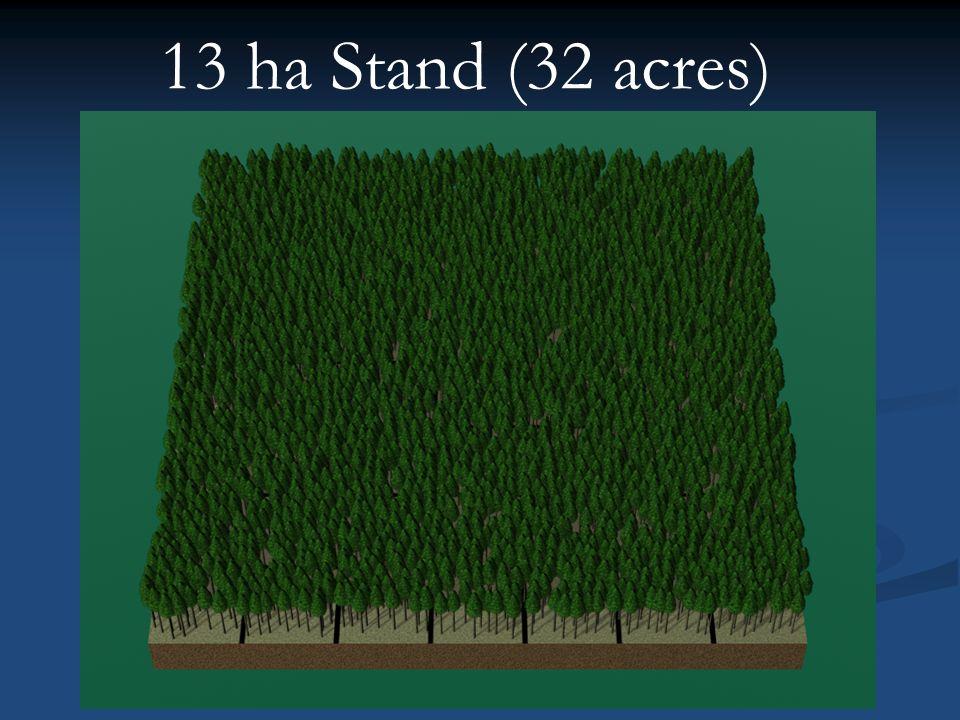 13 ha Stand (32 acres)