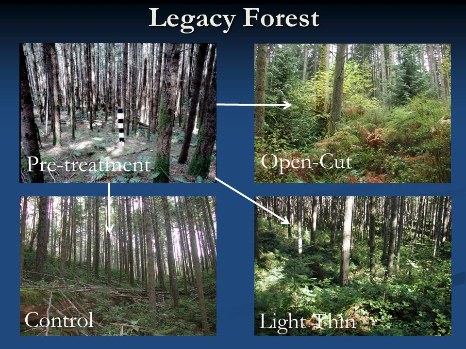 Legacy Forest Open-Cut Light Thin Control Pre-treatment