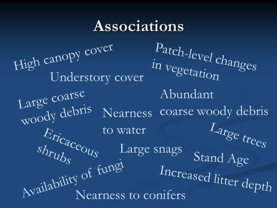 Associations Understory cover Patch-level changes in vegetation Large snags Large trees Ericaceous shrubs High canopy cover Nearness to conifers Nearness to water Abundant coarse woody debris Large coarse woody debris Increased litter depth Availability of fungi Stand Age