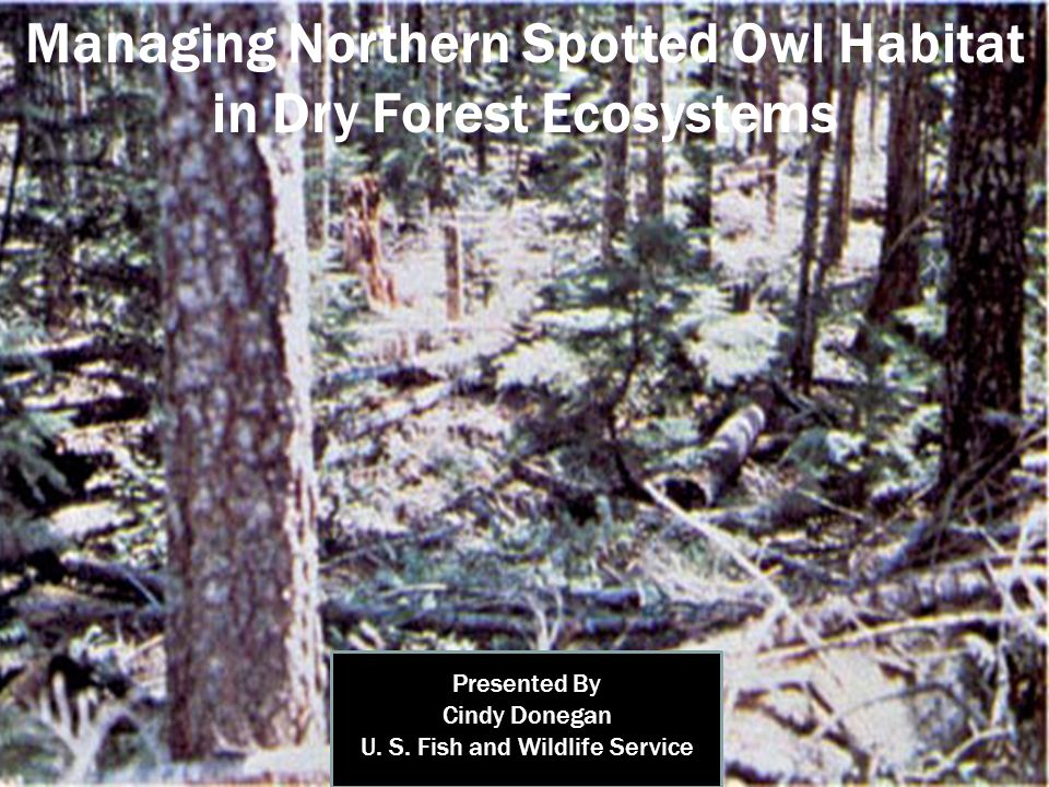Managing Northern Spotted Owl Habitat in Dry Forest Ecosystems Presented By Cindy Donegan U.