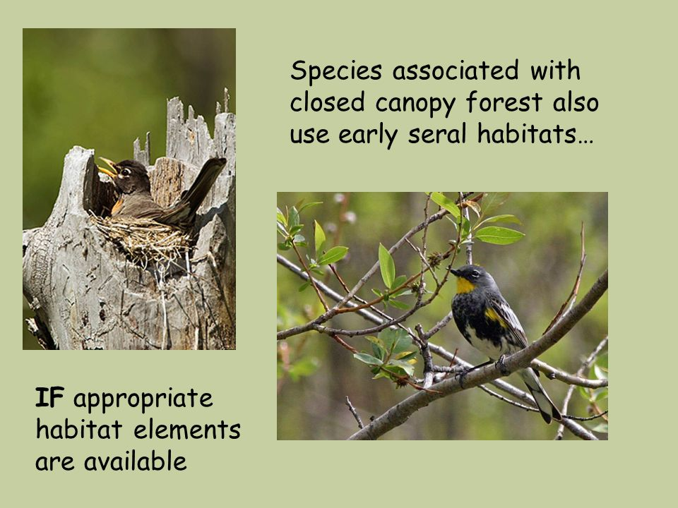 Species associated with closed canopy forest also use early seral habitats… IF appropriate habitat elements are available