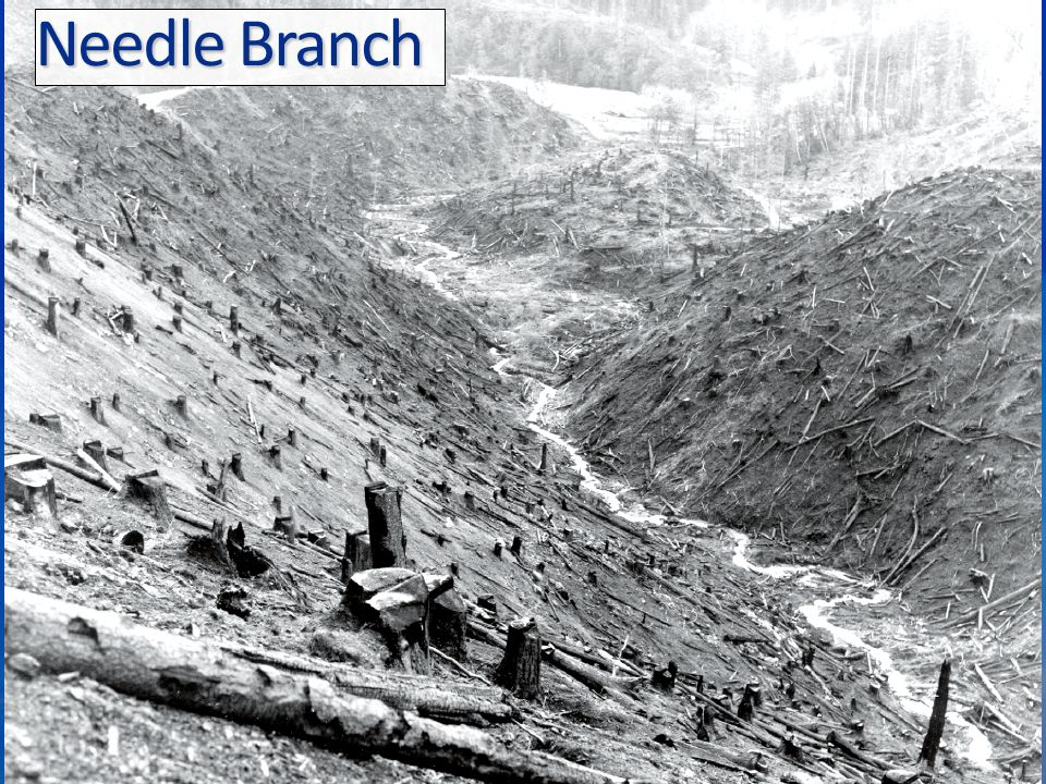 Needle Branch