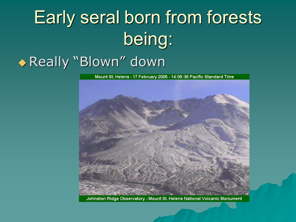 Early seral born from forests being: Really Blown down Really Blown down