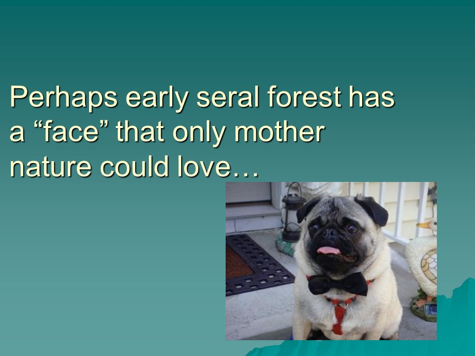 Perhaps early seral forest has a face that only mother nature could love…