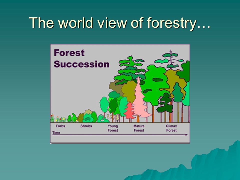 The world view of forestry…