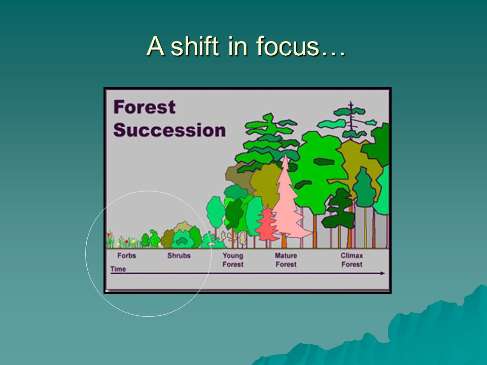 A shift in focus… A shift in focus…