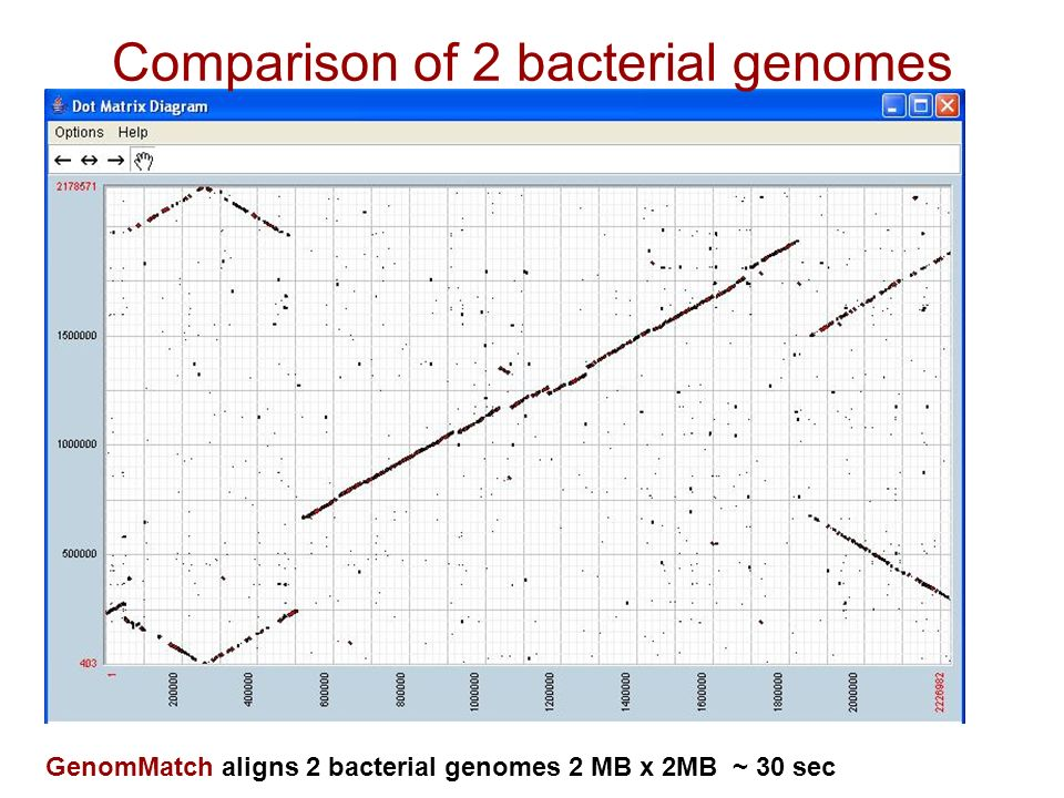 Comparison of 2 bacterial genomes GenomMatch aligns 2 bacterial genomes 2 MB x 2MB ~ 30 sec