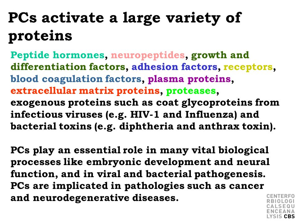 PCs activate a large variety of proteins Peptide hormones, neuropeptides, growth and differentiation factors, adhesion factors, receptors, blood coagu