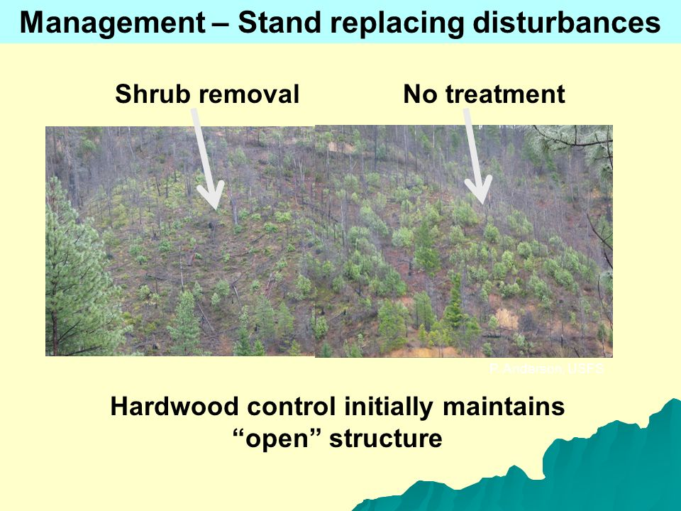 P. Anderson, USFS Management – Stand replacing disturbances Shrub removal No treatment Hardwood control initially maintains open structure