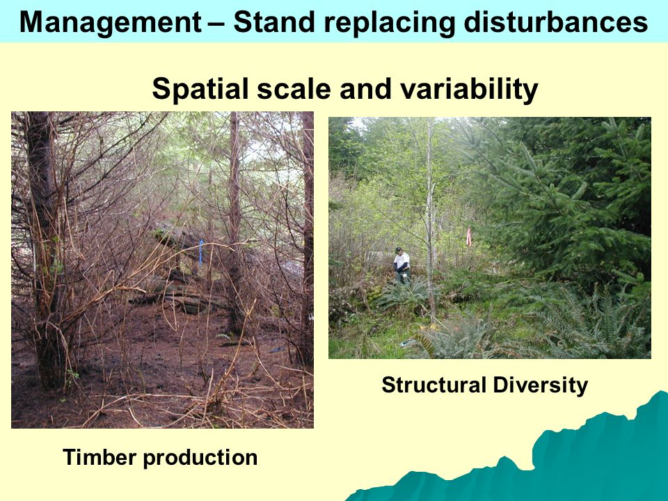 Spatial scale and variability Timber production Structural Diversity Management – Stand replacing disturbances