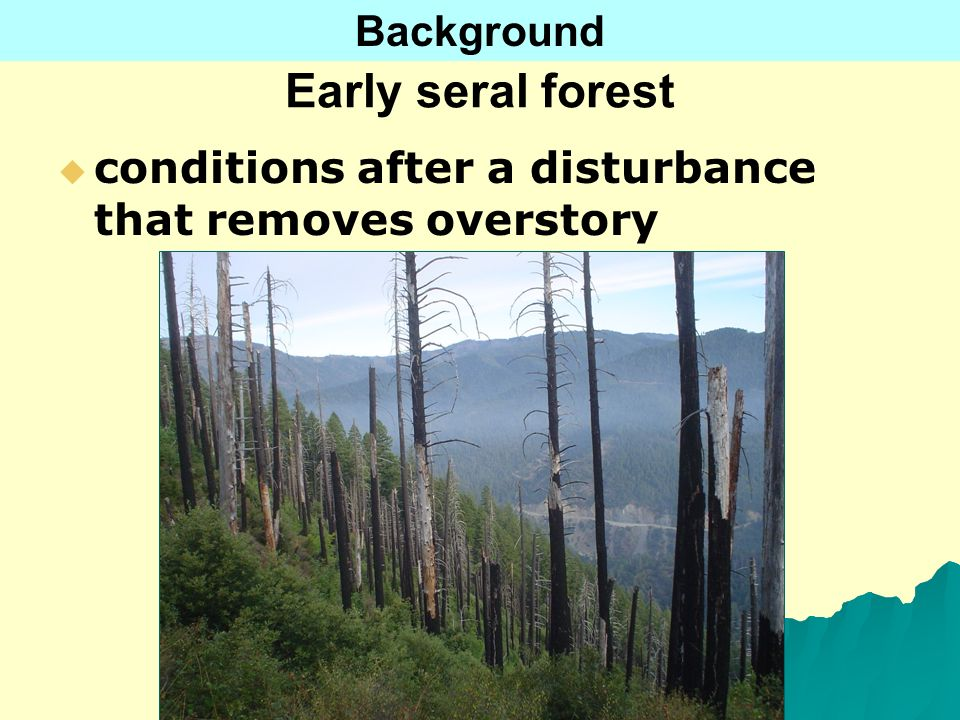 Early seral forest conditions after a disturbance that removes overstory Background
