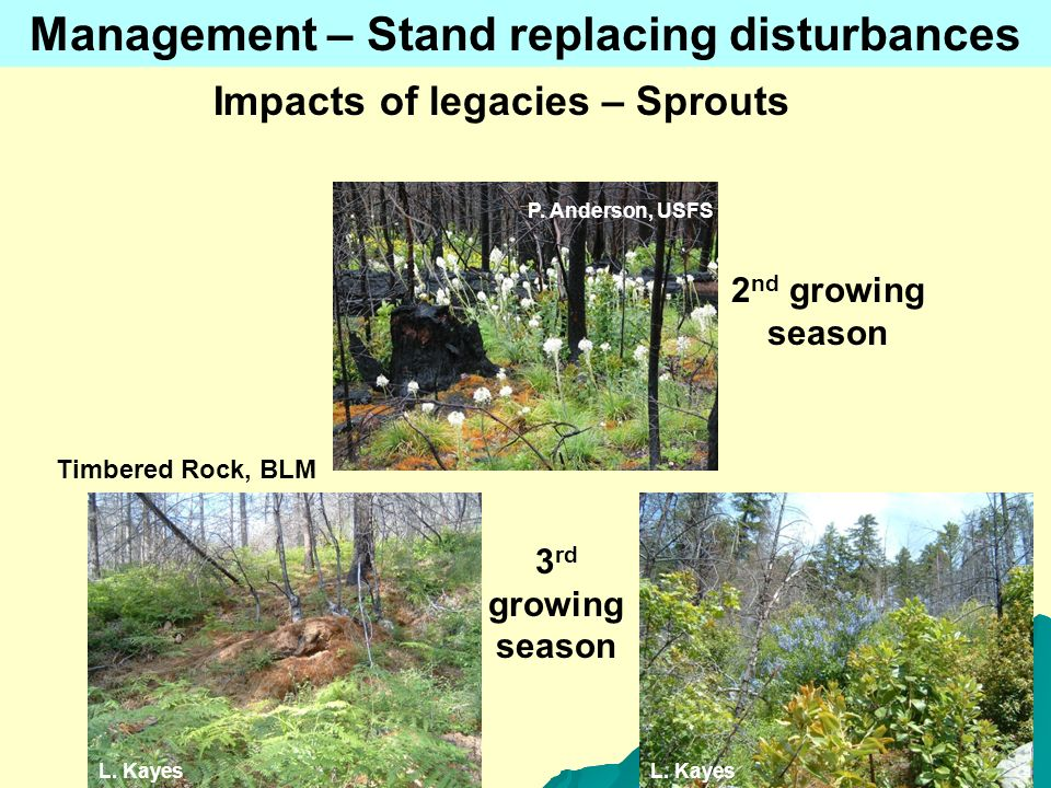 P. Anderson, USFS L. Kayes 2 nd growing season 3 rd growing season Management – Stand replacing disturbances Impacts of legacies – Sprouts Timbered Ro