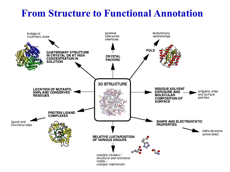 From Structure To Biochemical Function Gene Protein 3D Structure Function Given a protein structure: n Where is the functional site.