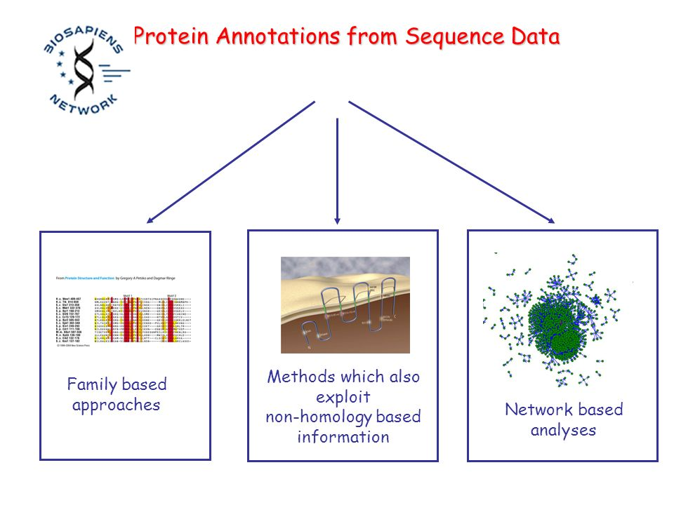 Family based approaches Methods which also exploit non-homology based information Protein Annotations from Sequence Data Network based analyses