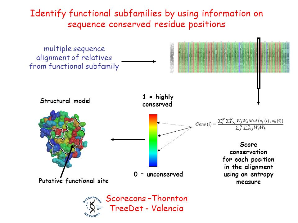 Score conservation for each position in the alignment using an entropy measure 1 = highly conserved 0 = unconserved Putative functional site Structural model Identify functional subfamilies by using information on sequence conserved residue positions Scorecons –Thornton TreeDet - Valencia multiple sequence alignment of relatives from functional subfamily