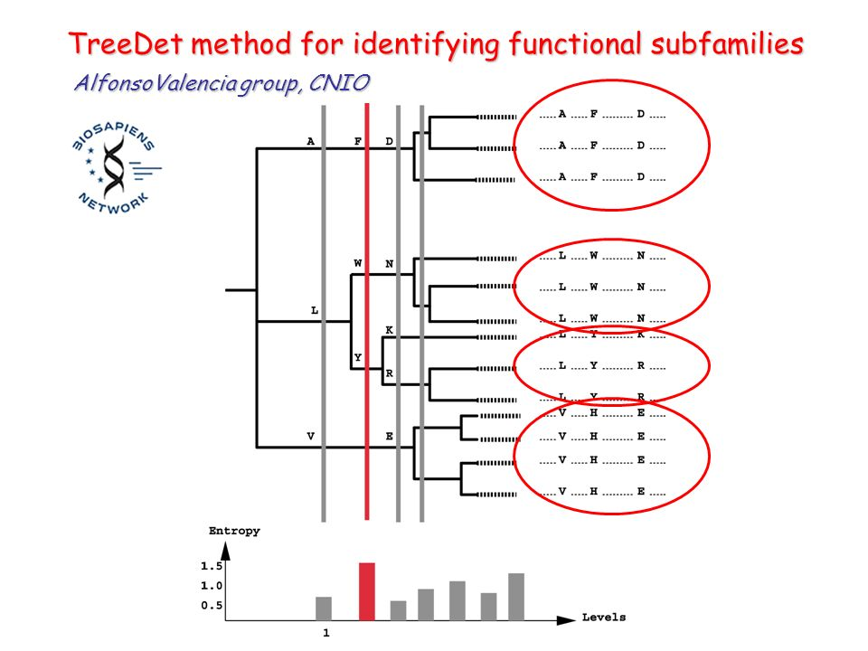 TreeDet method for identifying functional subfamilies AlfonsoValencia group, CNIO