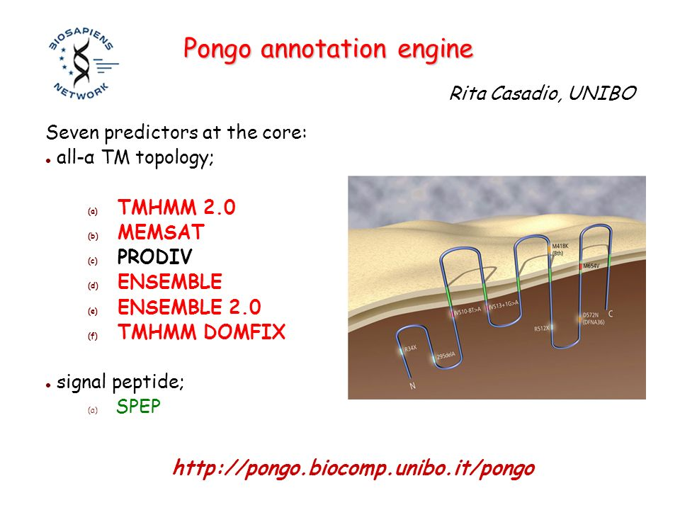 Pongo annotation engine Seven predictors at the core: all-α TM topology; (a) TMHMM 2.0 (b) MEMSAT (c) PRODIV (d) ENSEMBLE (e) ENSEMBLE 2.0 (f) TMHMM DOMFIX signal peptide; (a) SPEP Rita Casadio, UNIBO http://pongo.biocomp.unibo.it/pongo