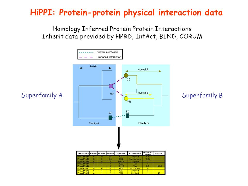 Homology Inferred Protein Protein Interactions Inherit data provided by HPRD, IntAct, BIND, CORUM HiPPI: Protein-protein physical interaction data Superfamily ASuperfamily B