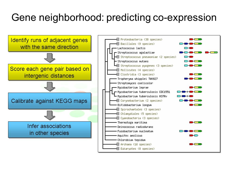 Gene neighborhood: predicting co-expression Identify runs of adjacent genes with the same direction Identify runs of adjacent genes with the same direction Score each gene pair based on intergenic distances Score each gene pair based on intergenic distances Calibrate against KEGG maps Infer associations in other species Infer associations in other species