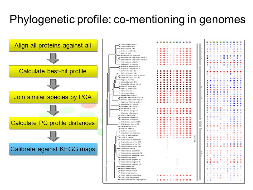 Phylogenetic profile: co-mentioning in genomes Align all proteins against all Calculate best-hit profile Join similar species by PCA Calculate PC profile distances Calibrate against KEGG maps