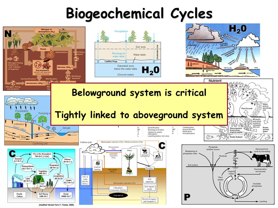 N H20H20H20H20 H20H20H20H20 H20H20H20H20C C N P Belowground system is critical Tightly linked to aboveground system