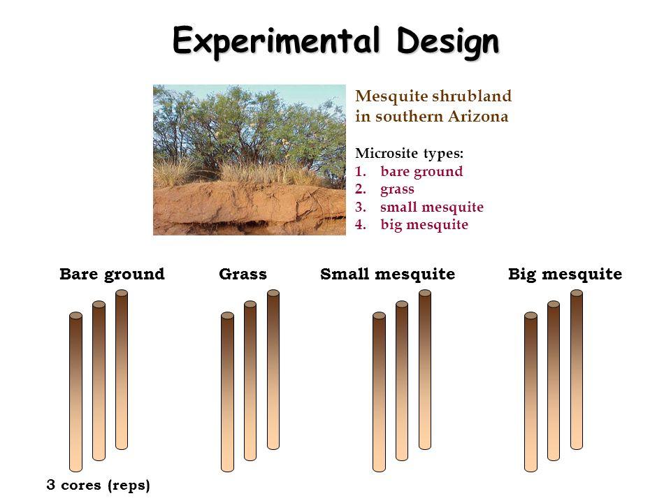 Experimental Design Mesquite shrubland in southern Arizona Microsite types: 1.bare ground 2.grass 3.small mesquite 4.big mesquite Bare groundGrassSmal