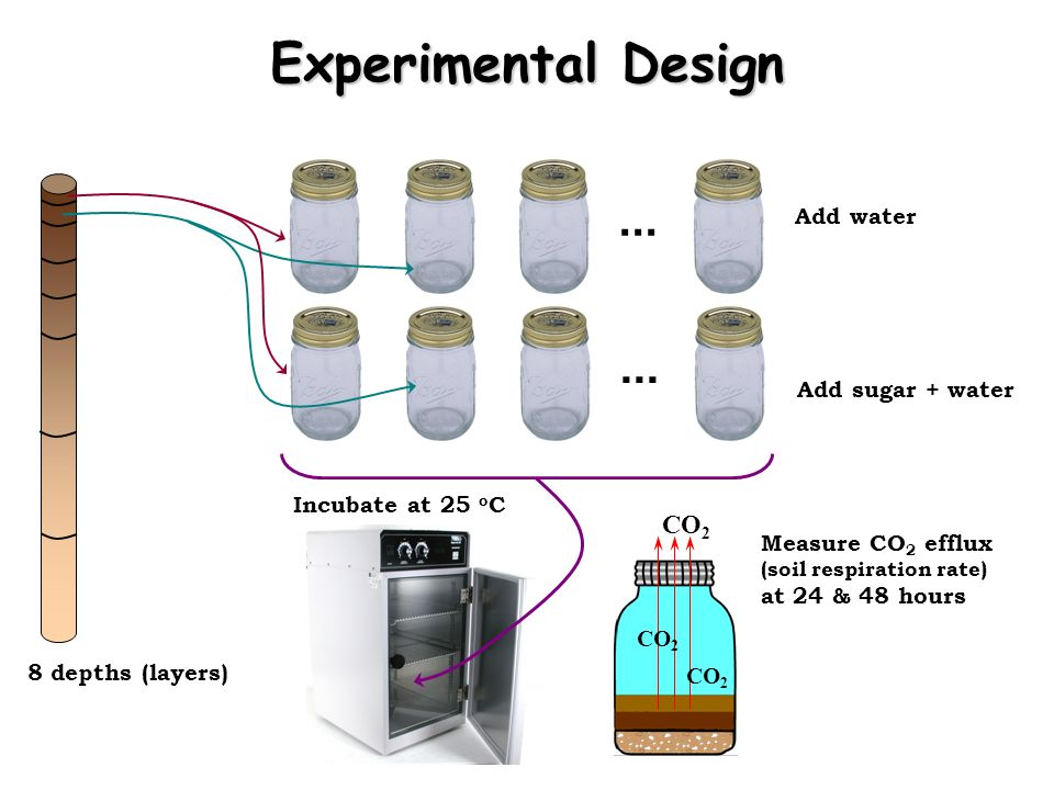 ... 8 depths (layers)... Add water Add sugar + water Incubate at 25 o C CO 2 Measure CO 2 efflux (soil respiration rate) at 24 & 48 hours Experimental