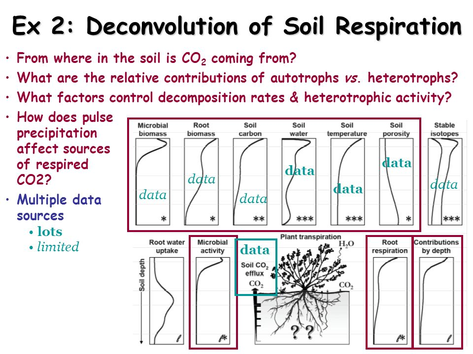 From where in the soil is CO 2 coming from? What are the relative contributions of autotrophs vs. heterotrophs? What factors control decomposition rat