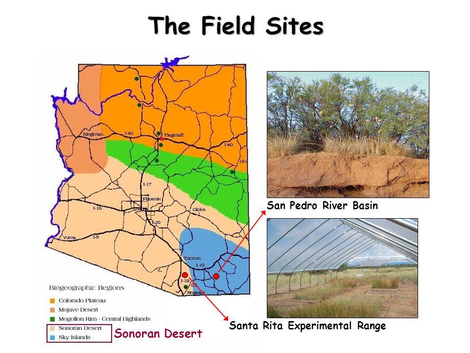 The Field Sites Sonoran Desert San Pedro River Basin Santa Rita Experimental Range