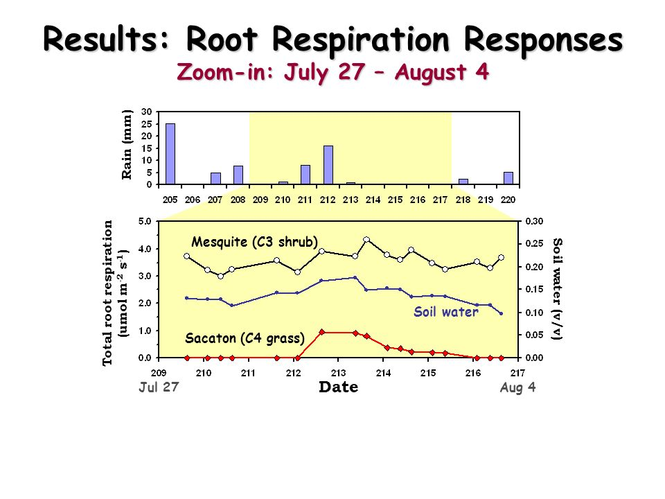 Results: Root Respiration Responses Zoom-in: July 27 – August 4 Date Total root respiration (umol m -2 s -1 ) Soil water (v/v) Rain (mm) Mesquite (C3