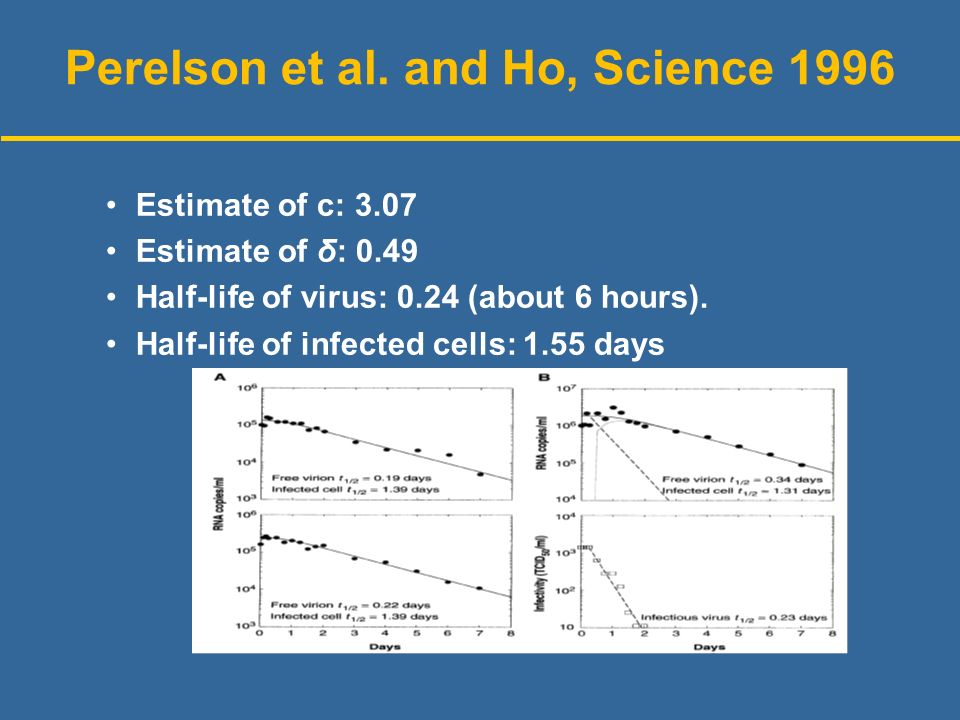 Perelson et al. and Ho, Science 1996 Estimate of c: 3.07 Estimate of δ: 0.49 Half-life of virus: 0.24 (about 6 hours). Half-life of infected cells: 1.