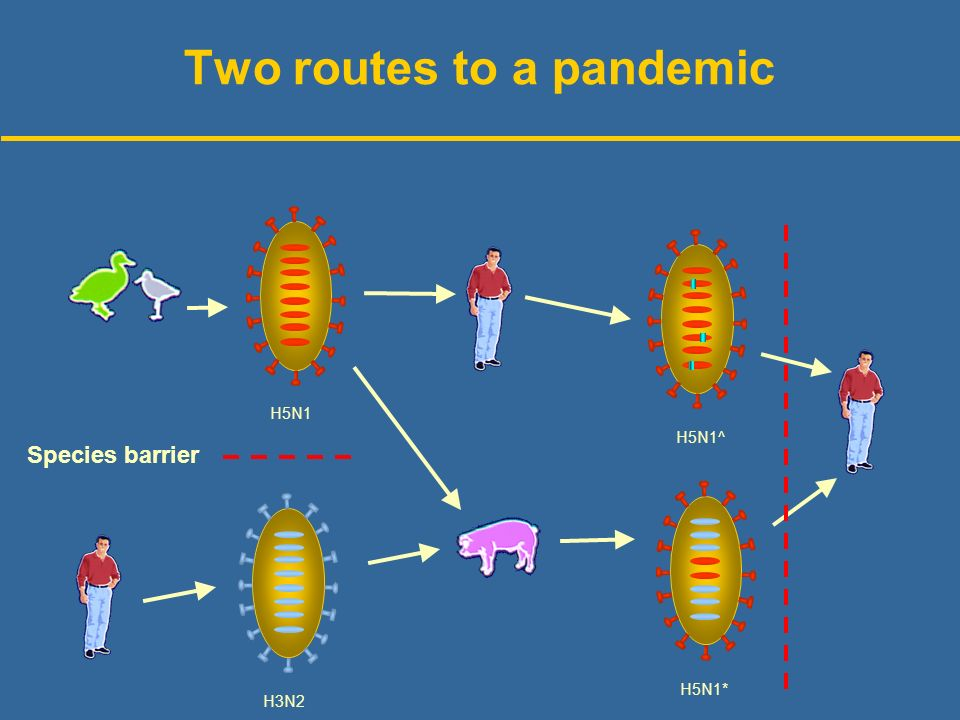 Two routes to a pandemic H5N1 H3N2 H5N1* H5N1^ Species barrier