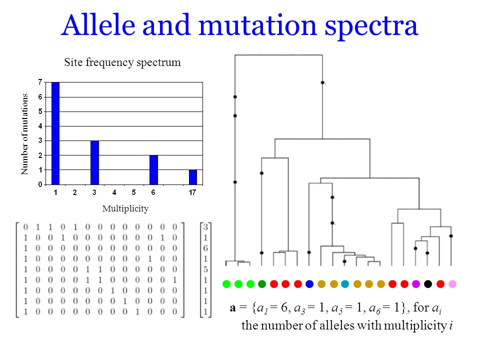 Site frequency spectrum Allele and mutation spectra Multiplicity Number of mutations a = {a 1 = 6, a 3 = 1, a 5 = 1, a 6 = 1}, for a i the number of a