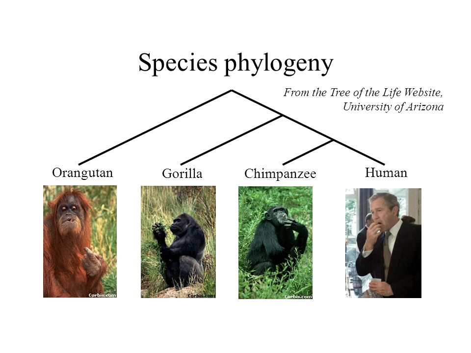 How did life evolve on earth.