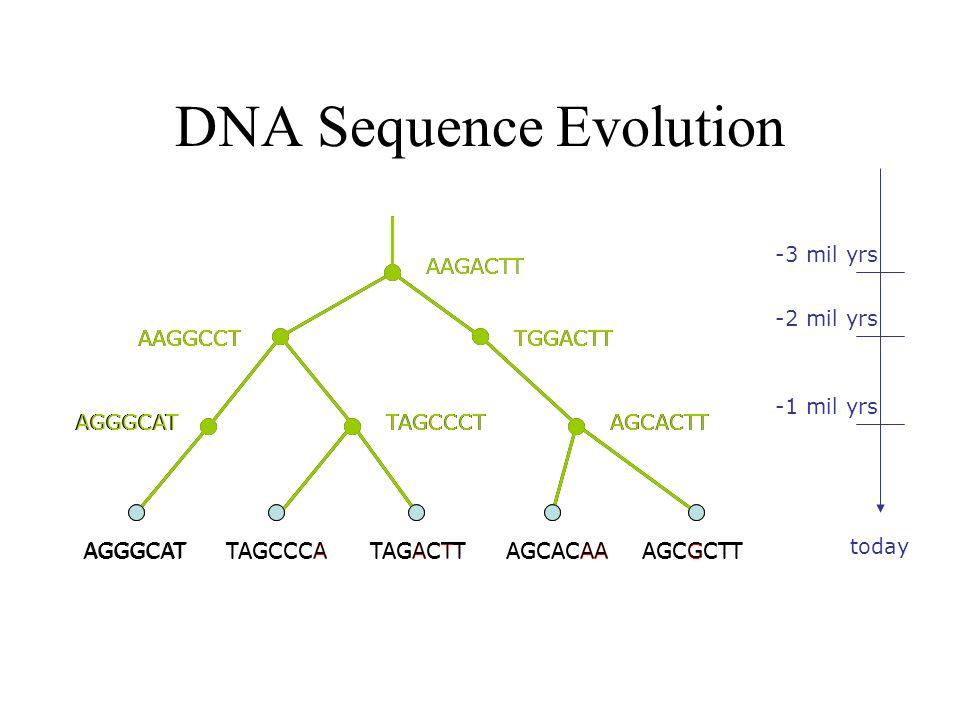 DNA Sequence Evolution AAGACTT TGGACTTAAGGCCT -3 mil yrs -2 mil yrs -1 mil yrs today AGGGCATTAGCCCTAGCACTT AAGGCCTTGGACTT TAGCCCATAGACTTAGCGCTTAGCACAA
