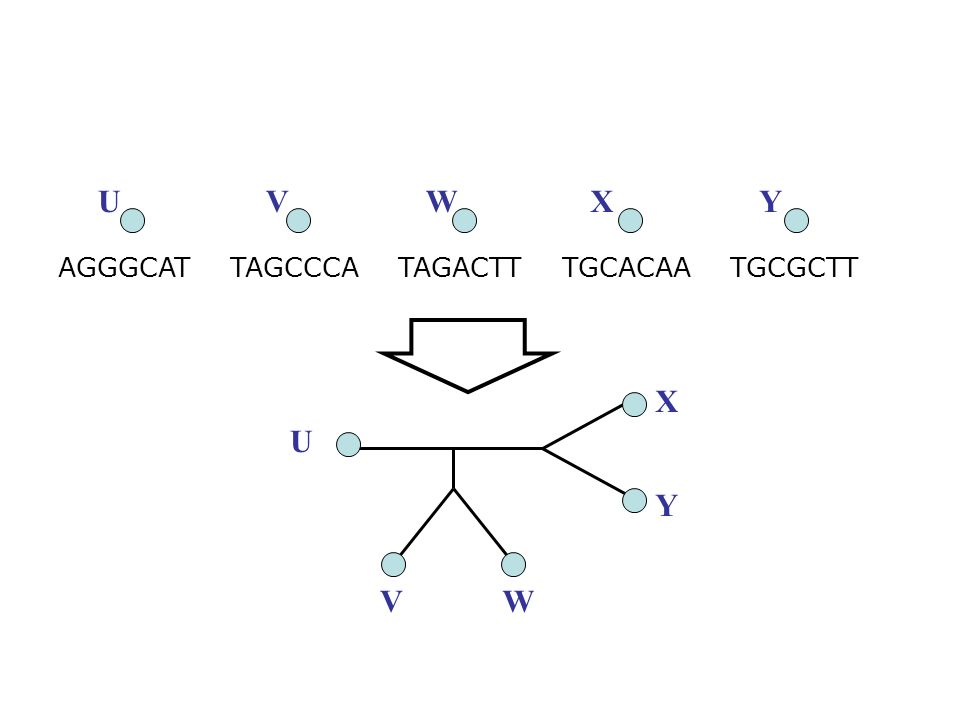 Standard Markov models Sequences evolve just with substitutions Sites (i.e., positions) evolve identically and independently, and have rates of evolution that are drawn from a common distribution (typically gamma) Numerical parameters describe the probability of substitutions of each type on each edge of the tree