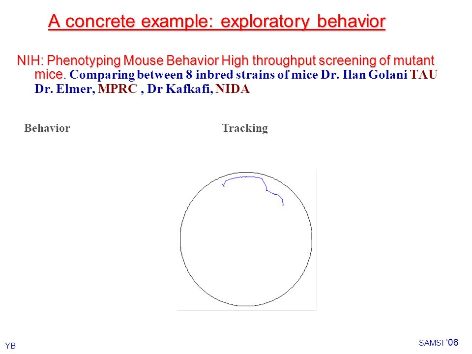 YB SAMSI 06 A concrete example: exploratory behavior NIH: Phenotyping Mouse Behavior High throughput screening of mutant mice.