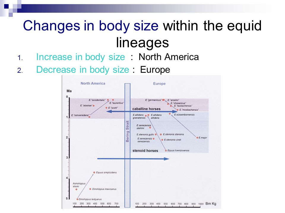 Changes in body size within the equid lineages 1. Increase in body size : North America 2. Decrease in body size : Europe