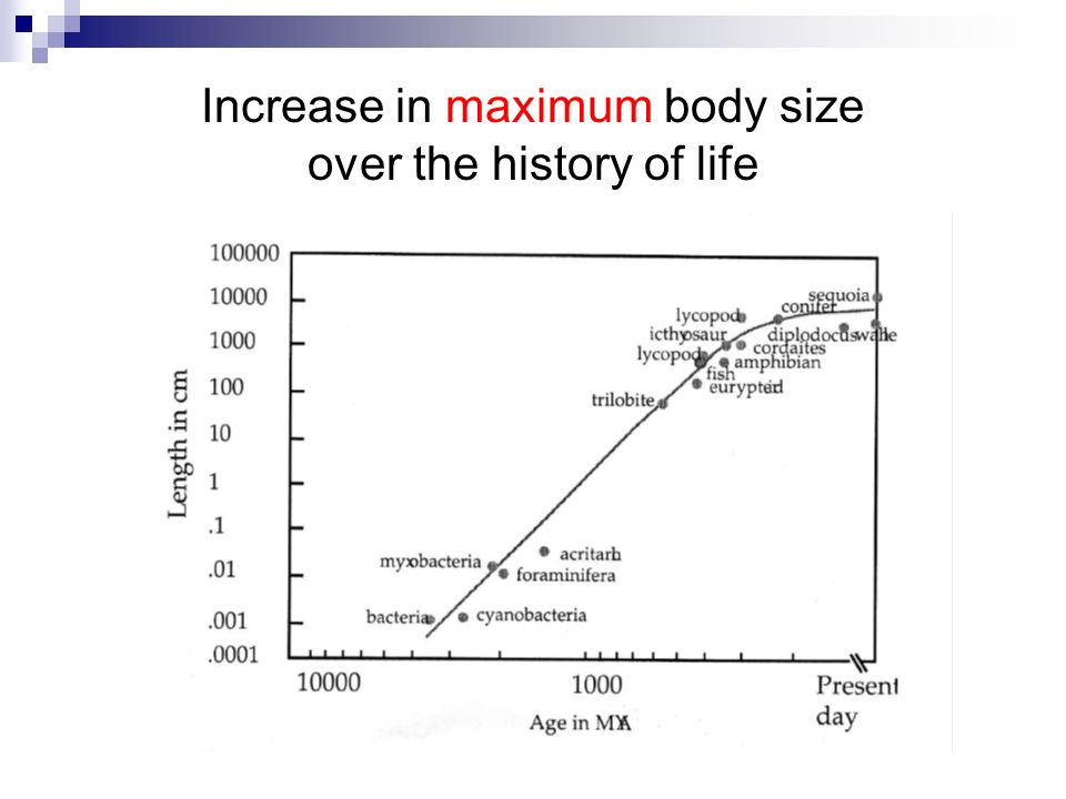 Increase in maximum body size over the history of life