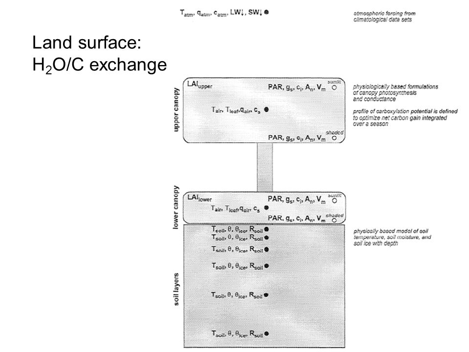 Land surface: H 2 O/C exchange