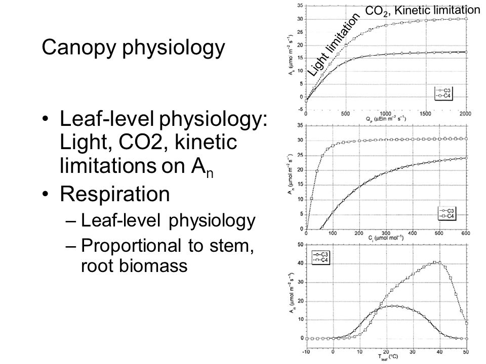Canopy physiology Leaf-level physiology: Light, CO2, kinetic limitations on A n Respiration –Leaf-level physiology –Proportional to stem, root biomass Light limitation CO 2, Kinetic limitation