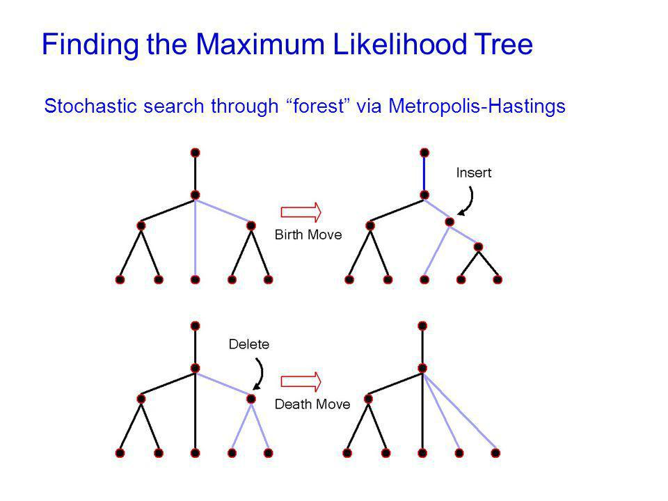 Finding the Maximum Likelihood Tree Stochastic search through forest via Metropolis-Hastings