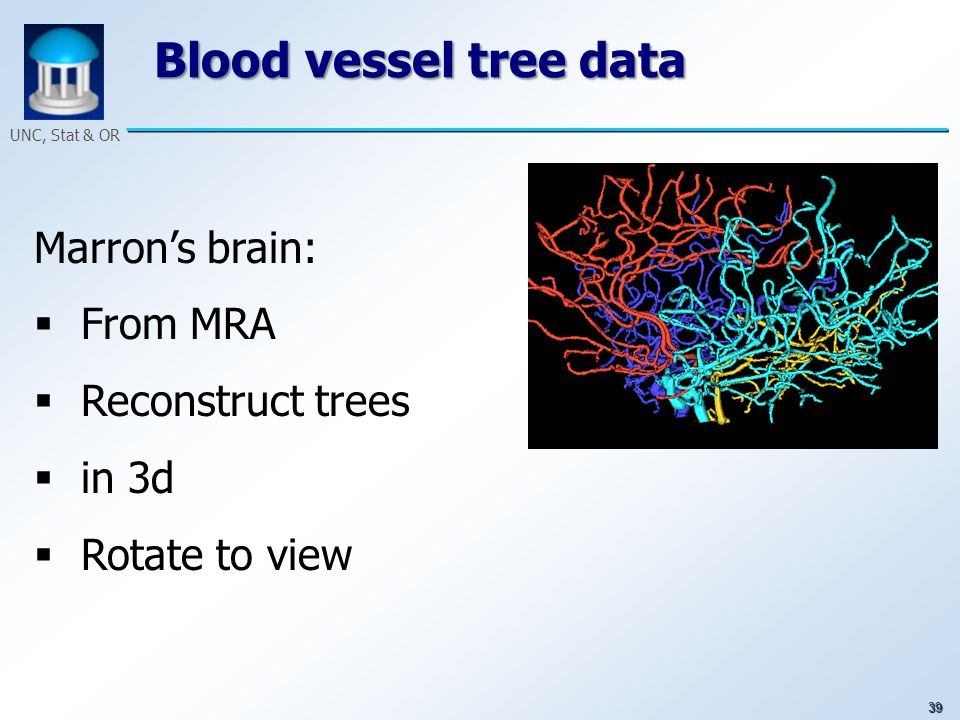 39 UNC, Stat & OR Blood vessel tree data Marrons brain: From MRA Reconstruct trees in 3d Rotate to view