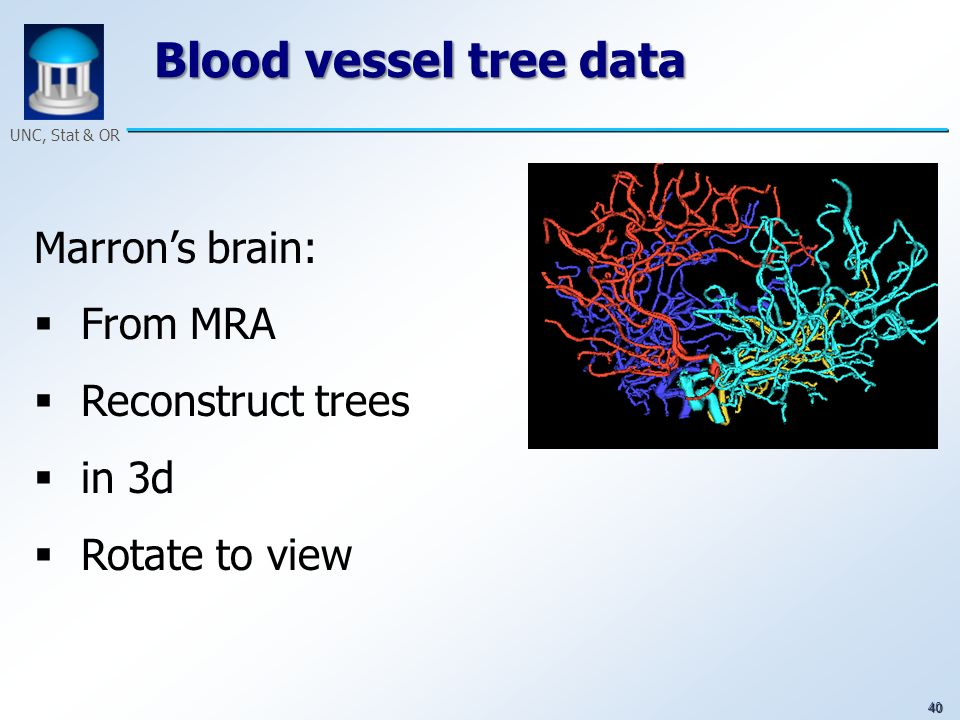 40 UNC, Stat & OR Blood vessel tree data Marrons brain: From MRA Reconstruct trees in 3d Rotate to view