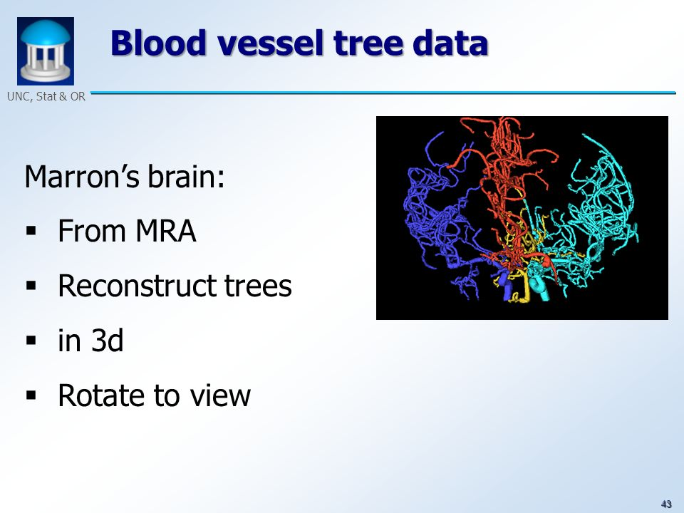 43 UNC, Stat & OR Blood vessel tree data Marrons brain: From MRA Reconstruct trees in 3d Rotate to view