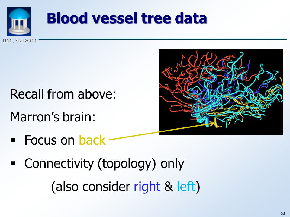 53 UNC, Stat & OR Blood vessel tree data Recall from above: Marrons brain: Focus on back Connectivity (topology) only (also consider right & left)