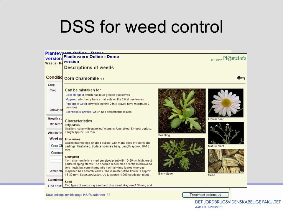 DSS for weed control