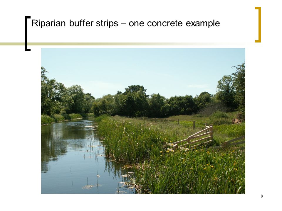 8 Riparian buffer strips – one concrete example