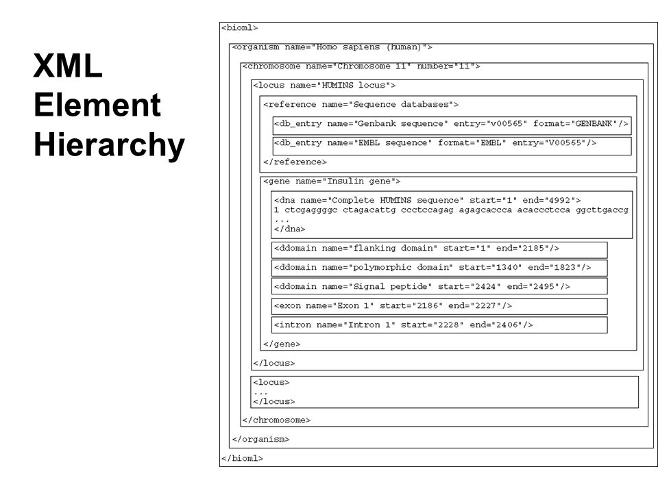 Specifying XML Hierarchies A DTD can specify the kinds of element that can be contained in an element.
