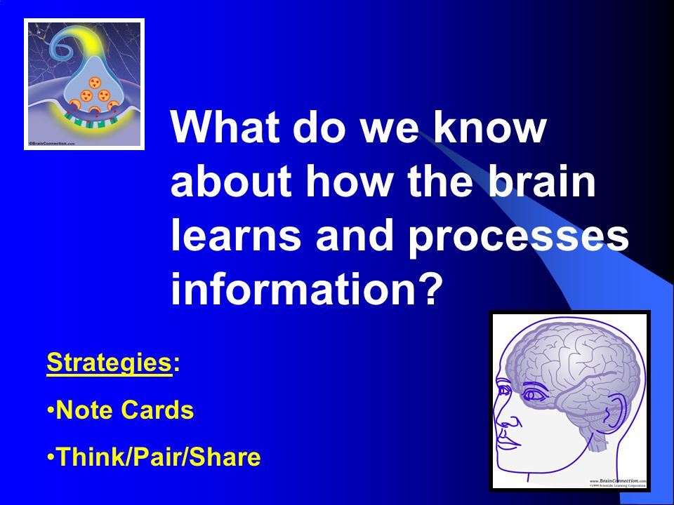 What do we know about how the brain learns and processes information.